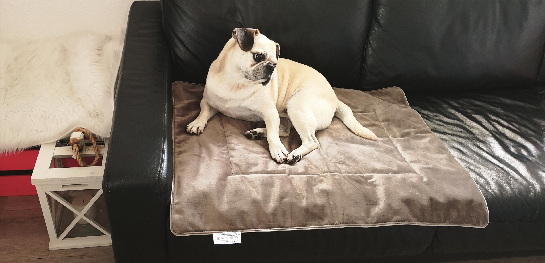 Fotoshooting mit Gizmo auf einer Hundedecke Magic Velvet Taupe